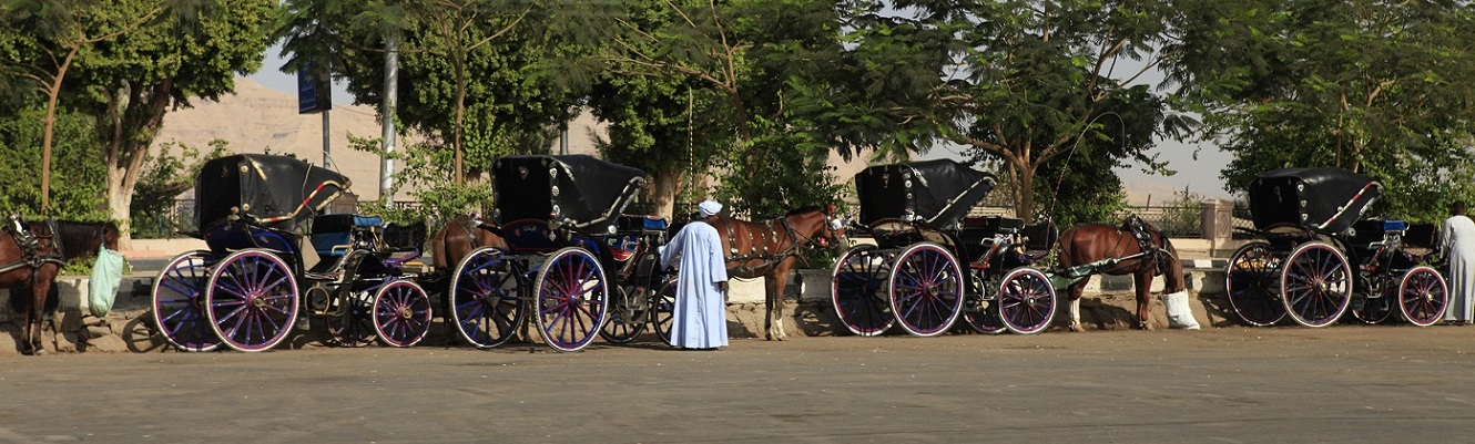 Aswan City Tour in Horse Carriage