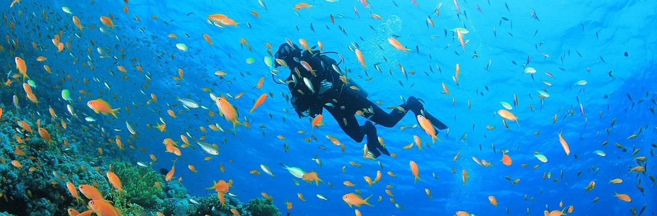Scuba diving Marsa Alam