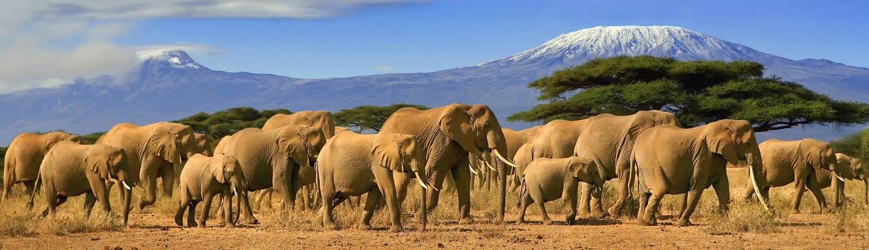 Best Kenya Safari Tour Package