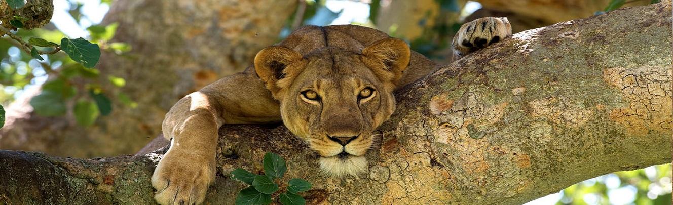 5 Days Kenya Safari Tour
