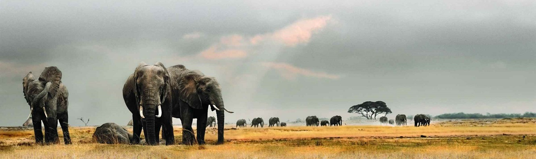 Footprints of Africa