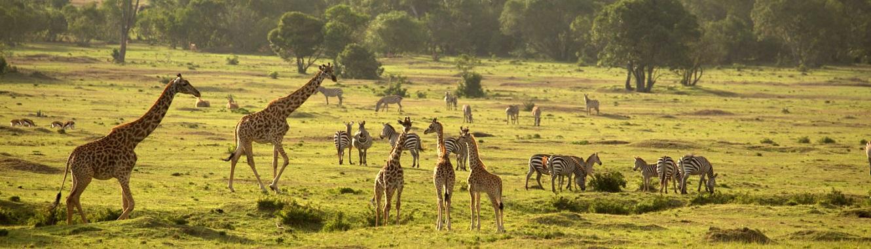 8 Days Tanzania Safari Tour