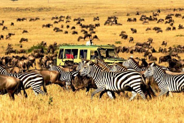 8 Days Tanzania Safari Tour map