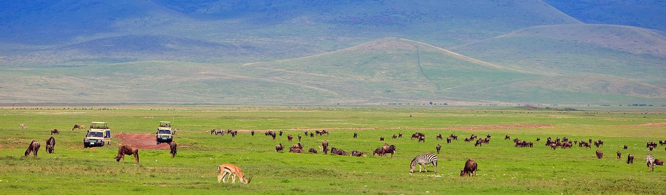 Tanzania Safari Package (Into the Ngorongoro Crater & Beyond)