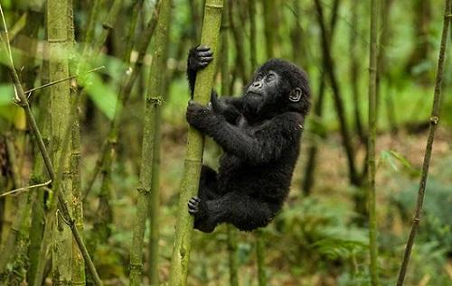 4 Days Rwanda Safari Tour map