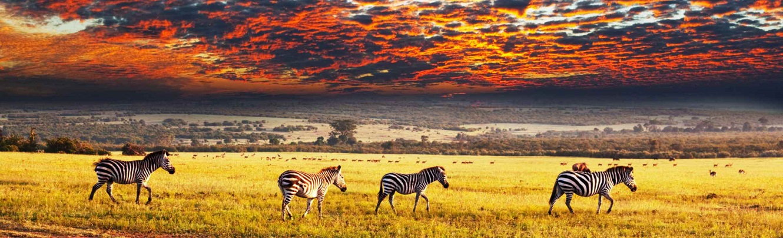 Taste of Rwanda Safari Tour