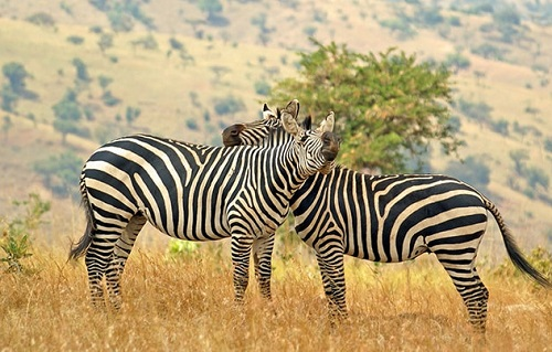 Taste of Rwanda Safari Tour map