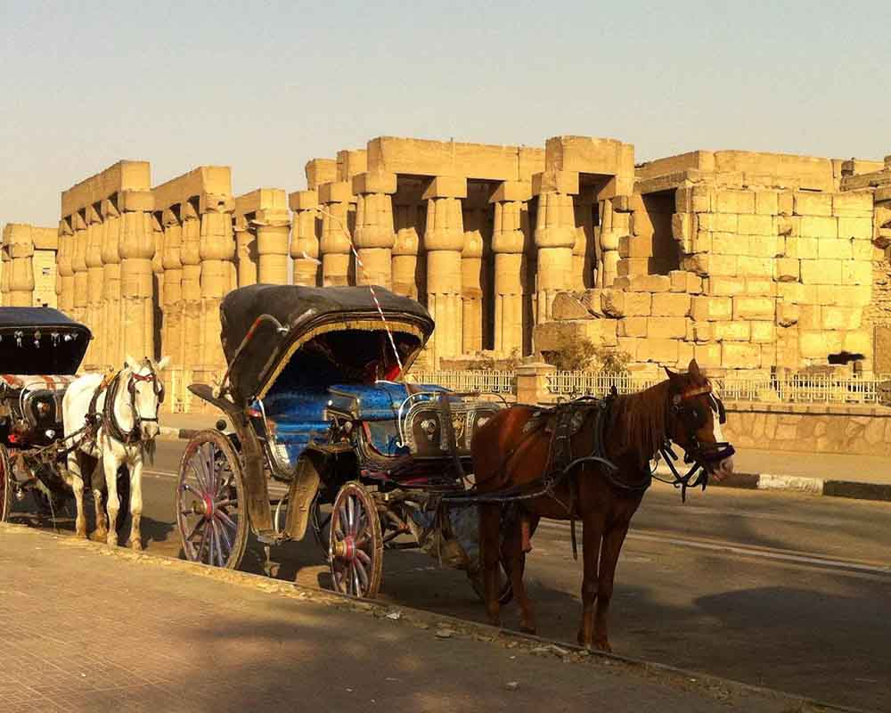 Luxor City tour by Horse Carriage